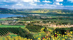 <strong><i>Israel in bloom....the green scene </i></strong> A fresh air escape in business class from <i>$2500</i> makes the trip so much nicer.