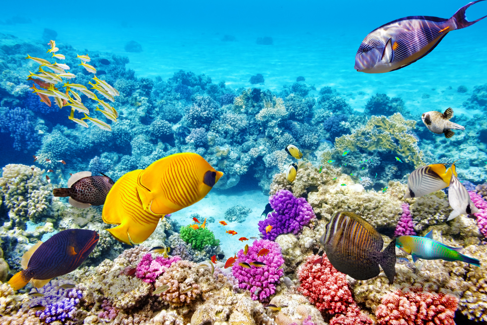 Great Barrier Reef Australia via Cairns (CNS) seven wonders of the world